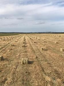 Grass hay behind the bailer. Rokewood Golden Plains Preview