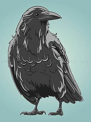 Crow Bird Art (ILLUSTRATION BIRD CROW RAVEN ROOK BEAK FEATHERS POSTER ART PRINT VE046A)
