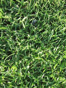 Turf / lawn - Kikuyu, Couch, and Palmetto Ebenezer Hawkesbury Area Preview