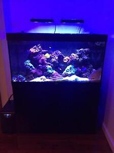 Mixed reef aquarium for sale Fannie Bay Darwin City Preview