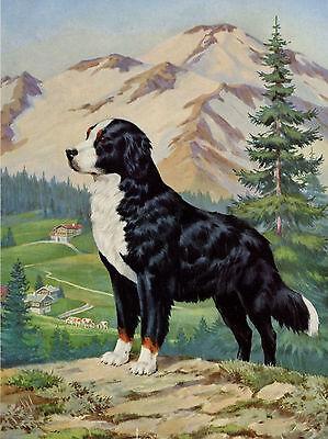 BERNESE MOUNTAIN DOG IN ALPINE SCENE GREETINGS NOTE CARD