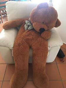 Huge teddy bear Woonona Wollongong Area Preview
