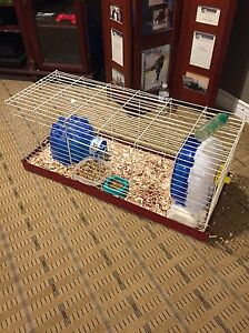 2 guinea pigs and cage Windsor Region Ontario image 3