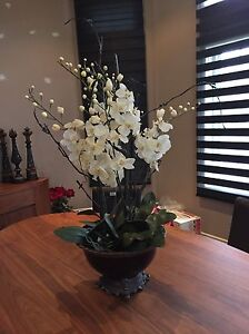 Beautiful white orchid use staging only