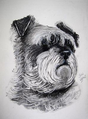 original charcoal drawing of a shnauzer dog by jean duffus