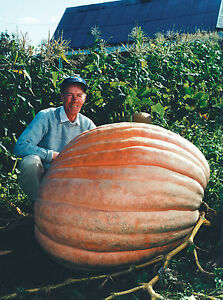 Dills-Atlantic-Giant-Pumpkin-Seeds-Monster-Pumpkin-Can-Grow-to-1600-lbs