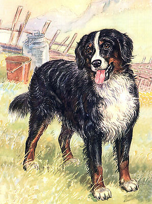 BERNESE MOUNTAIN DOG CHARMING LOVELY GREETINGS NOTE CARD