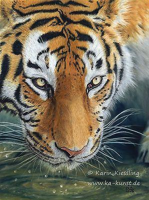 Original Amur Tiger pastel painting, ca. 30 x 40 cm