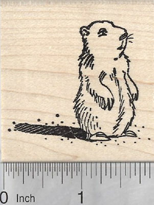Groundhog Day Rubber Stamp, Marmot with Shadow H29403 WM](Groundhog Day Crafts)