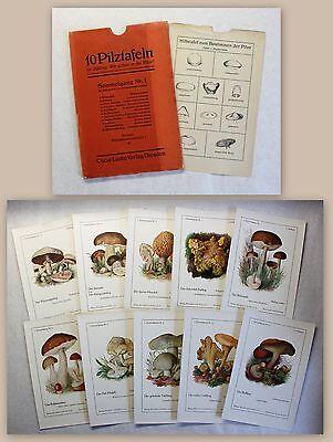 10 Pilztafeln zu Jühling Wir gehen in die Pilze um 1920 Mykologie Botanik Drucke