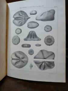 SISMONDA-ECHINIDI-FOSSILI-PIEMONTE-TORINO-1841-5-Tavole-ZOOLOGIA-GEOLOGIA