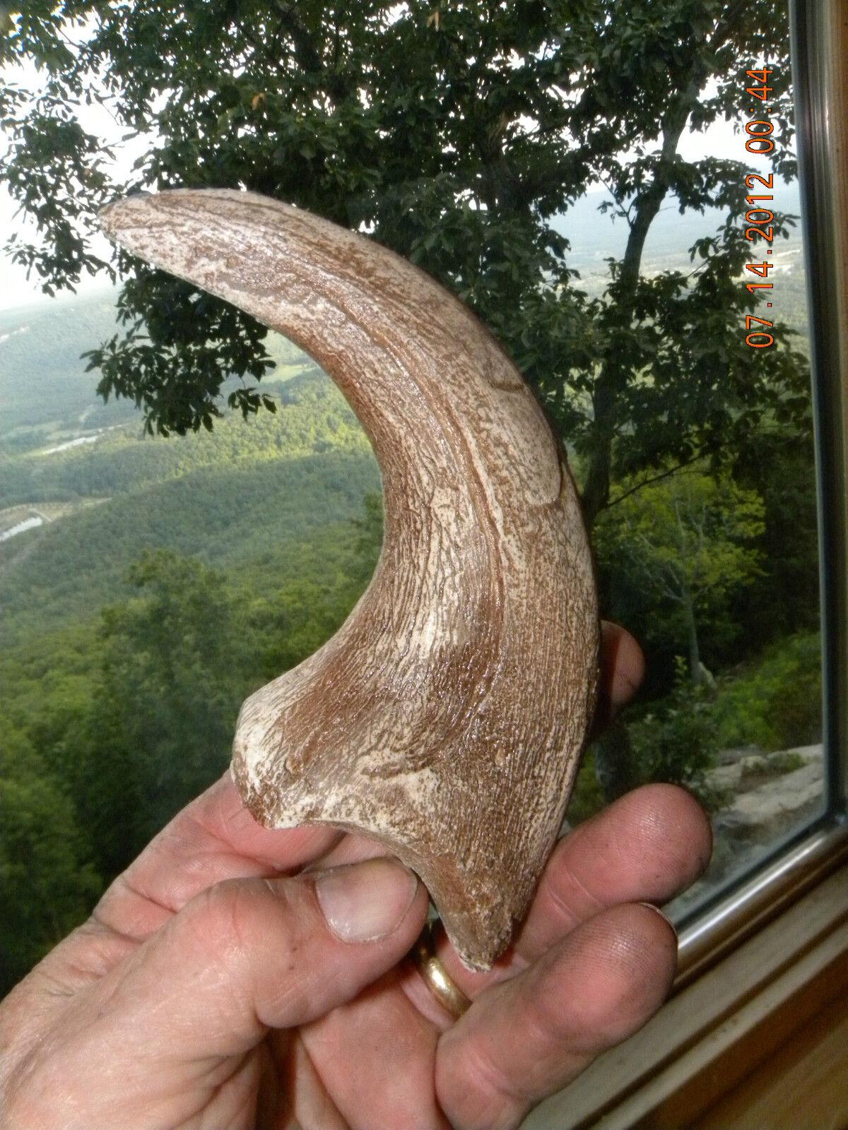 deinonychus jurassic world dinosaur fossil velociraptor