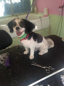 Bellas dog grooming and care London Ontario image 5