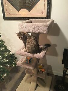 Scratching post (full size $200 2 month ago) - comes with cat! Prince George British Columbia image 6