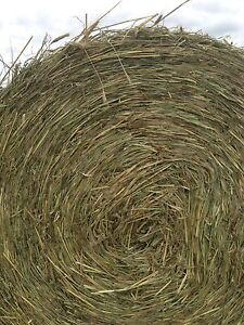 Oaten Silage Bales Keerrong Lismore Area Preview