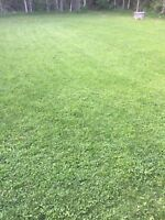 Registered and Insured Lawn Care