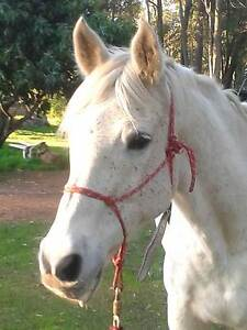 """""""Harmony Horse Farm""""  Riding and Horse Handling lessons Roleystone Armadale Area Preview"""