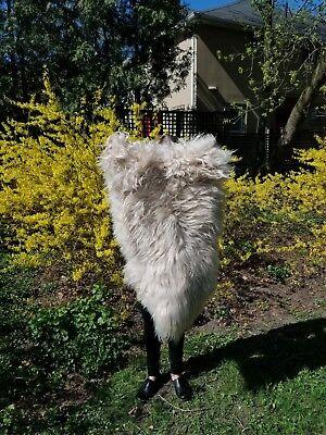 Genuine Natural Icelandic Sheepskin Rug 2 W X 3 L Long wool ,super soft