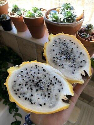 25 Yellow Dragon Fruit Seeds Golden Pitaya Pitahaya Hylocereus Megalanthus Easy