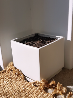 Garden sale - white ceramic plant pot w soil or bulk 6 for $55