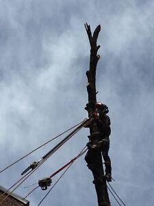 Service d'arbre Arborcare