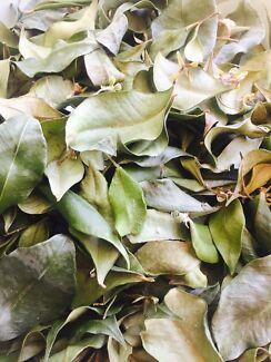 Australian Cinnamon Myrtle Leaves