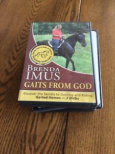 Gaited horse dvd