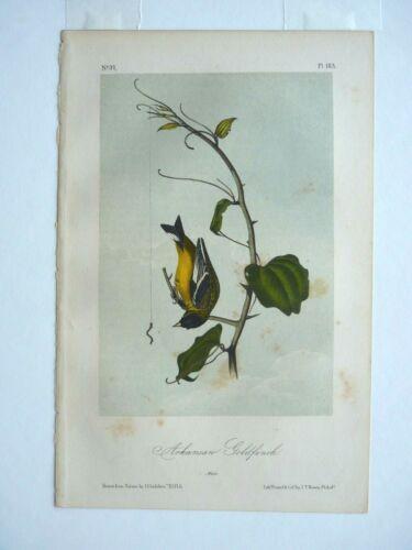 Arkansan Goldfinch Audubon Color Print 1850s Octavo Edition Plate #183 Antique