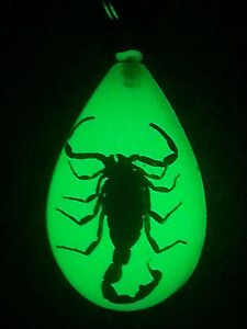 Real Scorpion Luminescent Keyring/Keychain Black Scorpion Glow in the Dark
