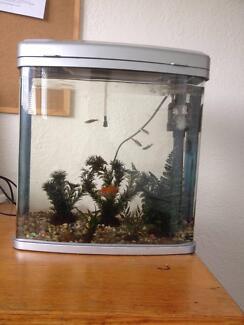 Urgent Aquarium and Fish Sale Mowbray Launceston Area Preview