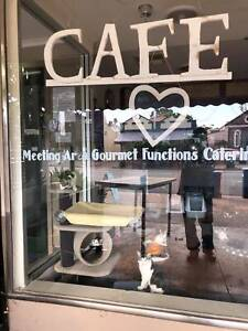Meow Me Cat Cafe - Cats & Kitten Adoptions