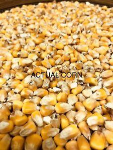 Quality Shelled Corn