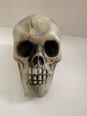 Made in USA Skull Skeleton head Knob goth Halloween Scared Decorative - Skeleton Heads