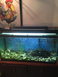 Aquarium 33 gallon