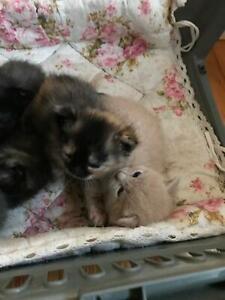 Kittens 5 weeks now