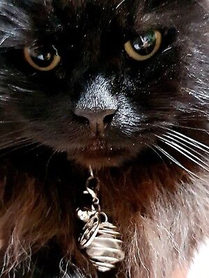 Pentagram Charm & Crystal Cat Dog Pet Collar Silver Bell Witches Pentacle Metal (Cat Bell Collar Charm)