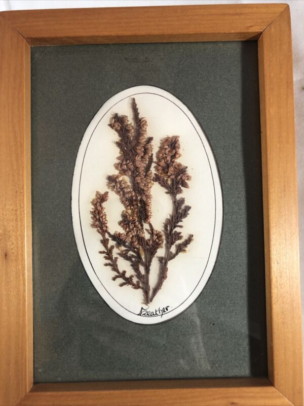 Vintage Framed Pressed Heather Flower Knockane Annascaul Co. Kerry Eire Ireland