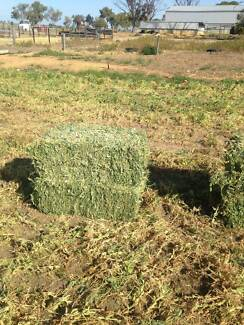 Pea Hay for sale Brookton Brookton Area Preview