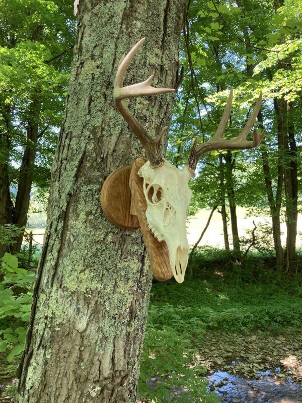 skull mount hanger solid oak handmade