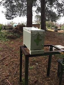 Beekeeping bee hive nucleus Highbury Tea Tree Gully Area Preview