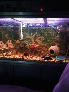 4 foot fish tank Armadale Armadale Area Preview