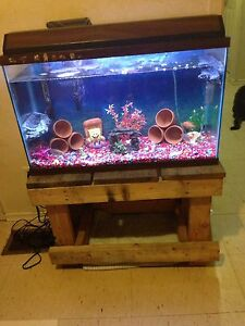 40 gallon fish tank with 5 fish