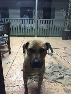 Billy needs a new home Maitland Maitland Area Preview