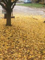 LEAF REMOVAL BEFORE SNOW