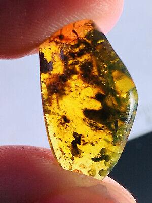 Plant Tree Leaf&cicada Burmite Myanmar Burmese Amber insect fossil dinosaur age