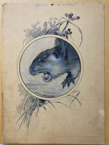 Original Art Painting Beaver by Bruce Horsfall, Signed, Ink & Watercolor