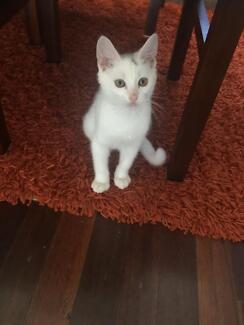 Kitten on sale