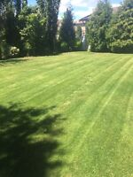 Need lawn care or landscaping at a reasonable rate?