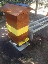 Pure Honey straight from the Beehive Jimboomba Logan Area Preview