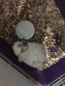 Free loop bunny